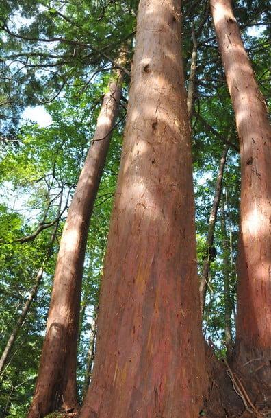 「高野檜皮」と言われる、古来では日本全国に名の知れた建築部材の高級ブランド