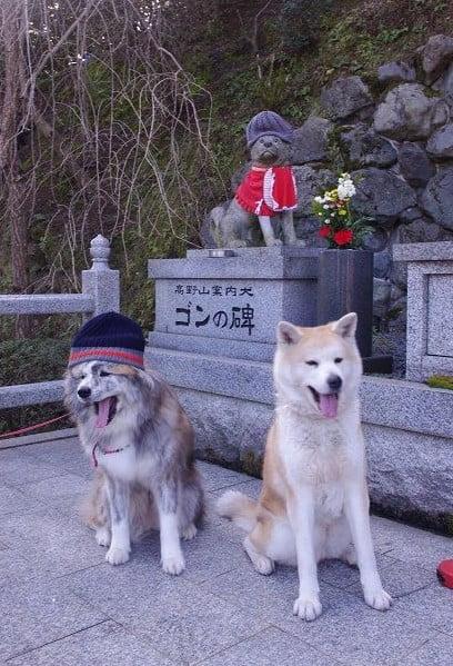 実は、高野山を開山した「弘法大師」を導いいたのも犬だった!