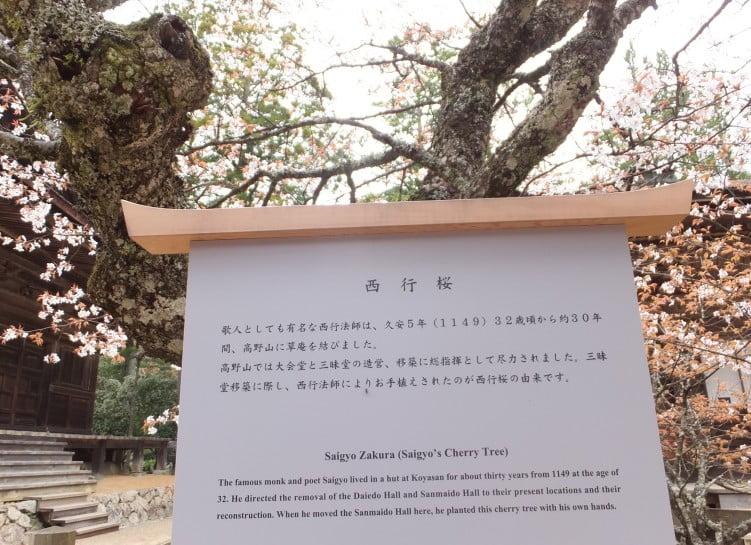 西行が詠んだ「西行桜の和歌」と、その歌詞に込められた意味
