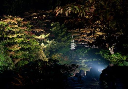 高野山・西南院「大石庭」の紅葉時期の「幻想的なライトアップ」